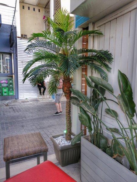 CAVOS RESTAURANT - EL PARADISO CLUB - ELITE CLUB-12