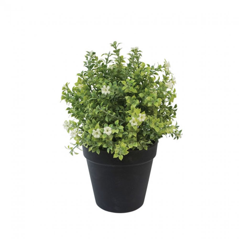 GREENERY IN FLOWER POT WITH WHITE FLOWER 24CM