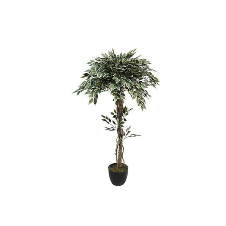 ARTIFICIAL FICUS BENJAMIN TREE BALL TWO COLOURS 120CM