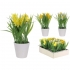 NARCISSUS IN FLOWER POT (3 COLOURS) 22CM