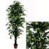ARTIFICIAL FICUS BENJAMIN TREE GREEN 210CM