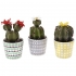 CACTUS IN FLOWER POT (3 DESIGNS) 15CM