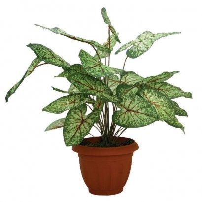 ARTIFICIAL SYNGONIUM PLANT 70CM - 1