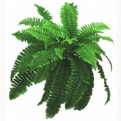 ARTIFICIAL HANGING FERN 60x80CM - 1