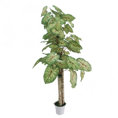 ARTIFICIAL SYNGONIUM TREE 170CM - 1