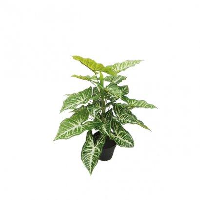 ARTIFICIAL CALADIUM PLANT REAL TOUCH 45CM - 1